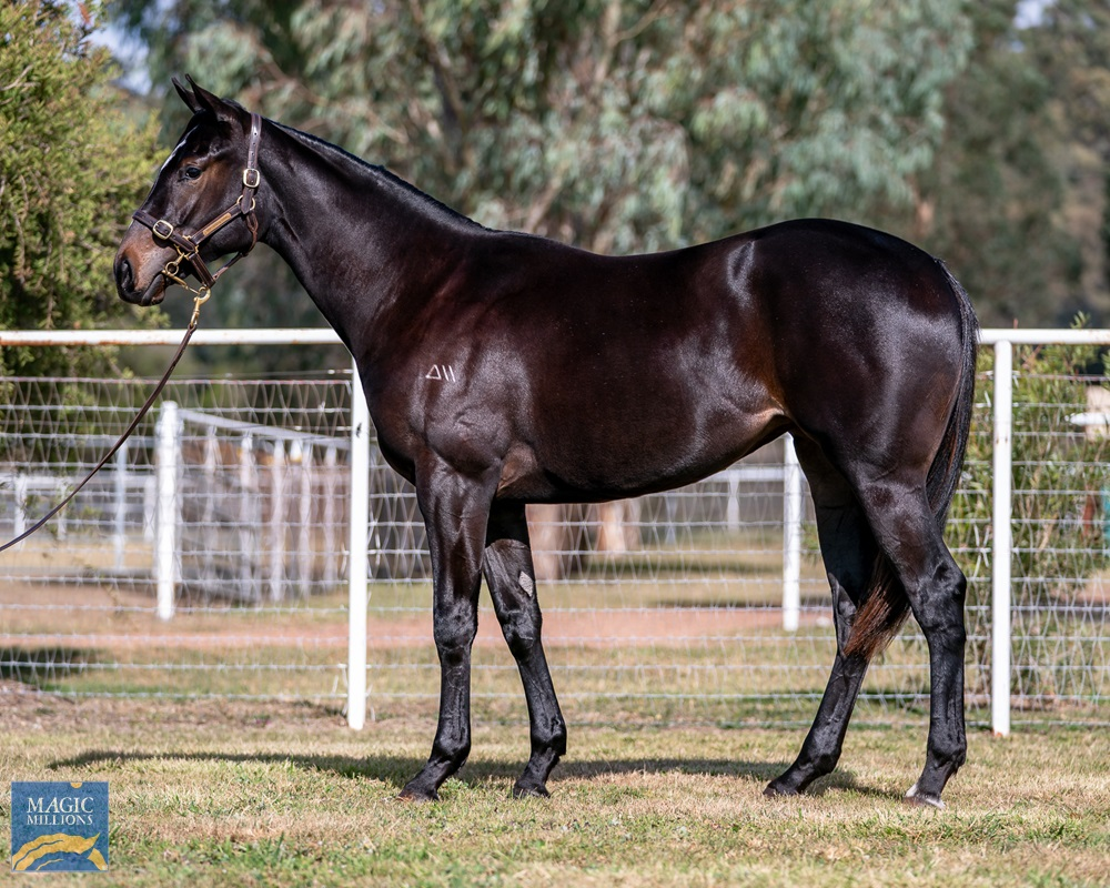 Caravaggio (USA) / No Mistaking (AUS) 2019 Filly - Image 1