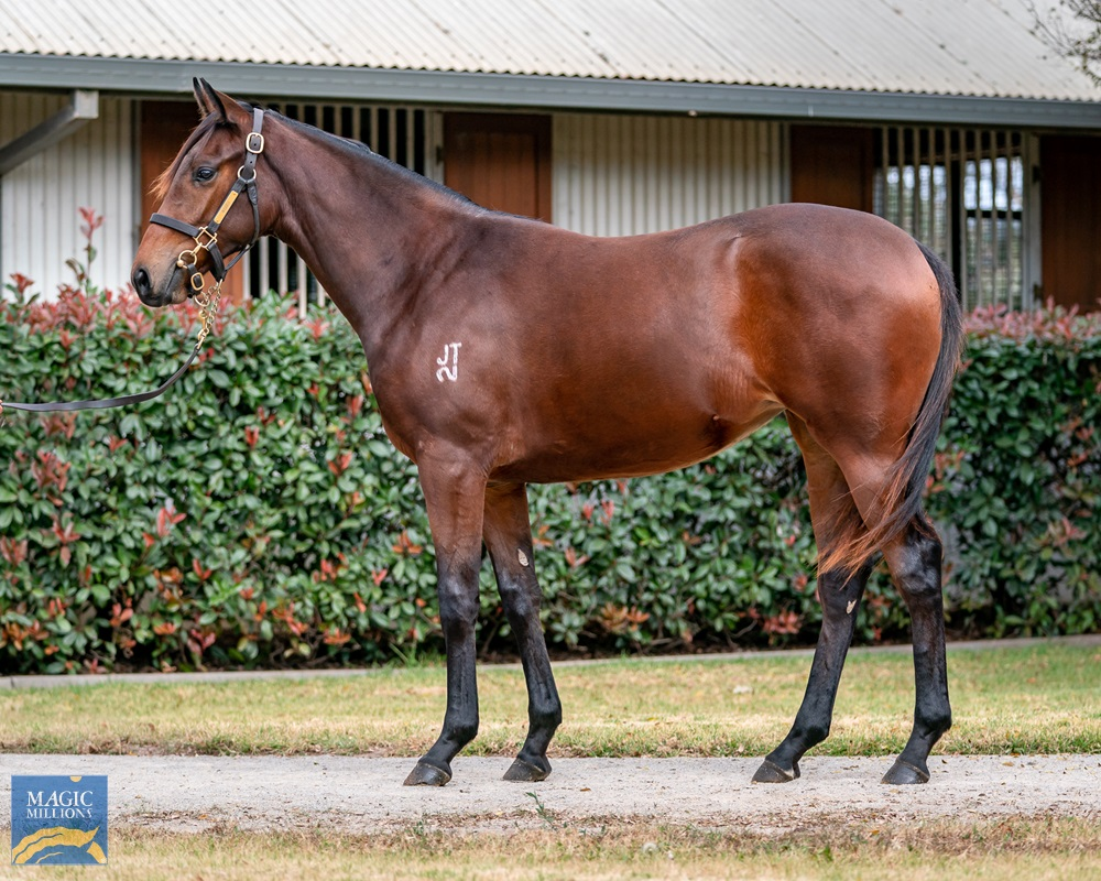 Vancouver (AUS) / Lucky Valentine (AUS) 2019 Filly - Image 1