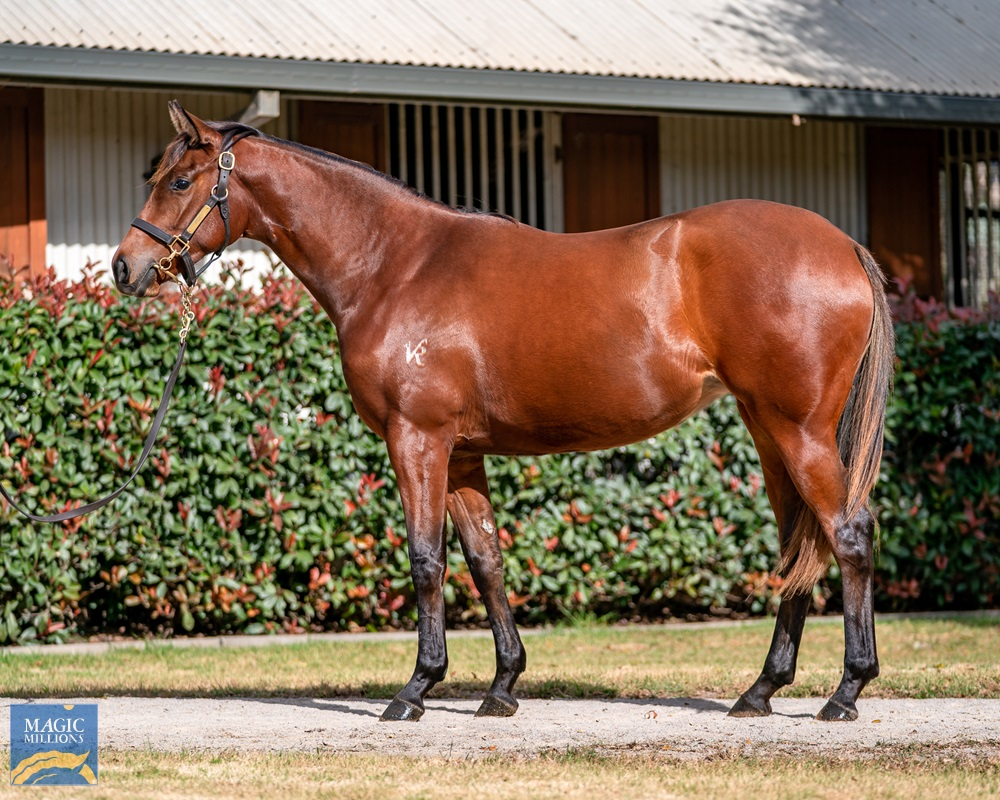 Russian Revolution (AUS) / Dizired (AUS) 2019 Filly - Image 1