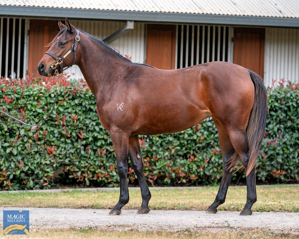 Russian Revolution (AUS) / Drappier (NZ) 2019 Filly - Image 1