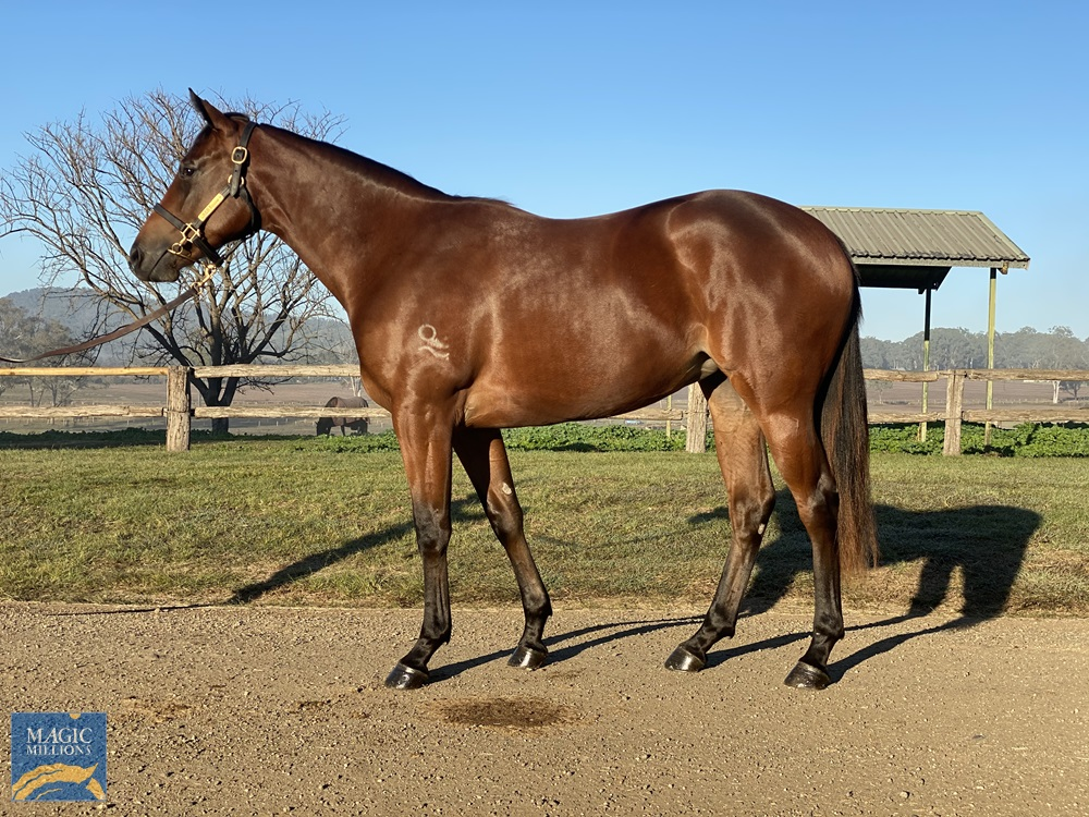 Jukebox (AUS) / Le Quirky (AUS) 2019 Filly - Image 1
