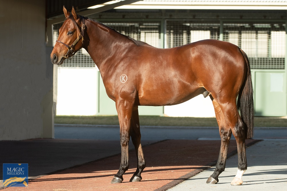 Shooting to Win (AUS) / Summery (AUS) 2019 Colt - Image 1
