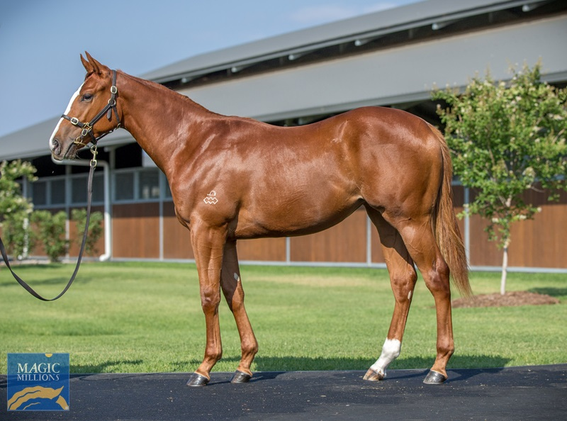 Real Impact (JPN) / Wingstack (AUS) - photo 1