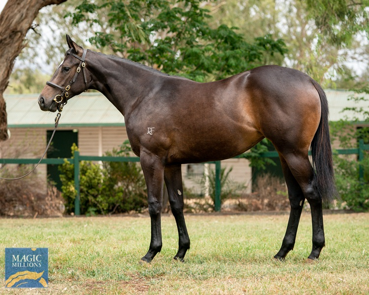 I Am Invincible (AUS) / Berimbau (AUS) - photo 1