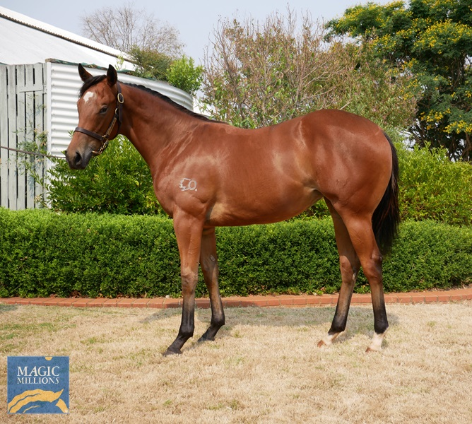Rubick (AUS) / Exceed Expectation (AUS) - photo 1