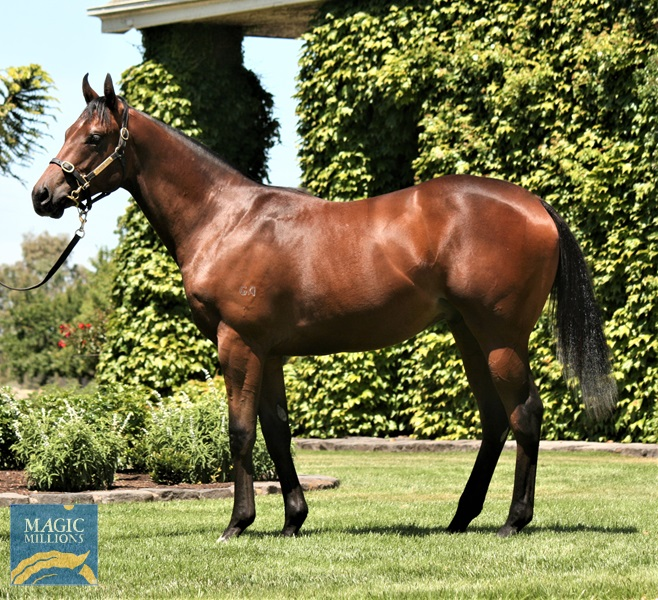 I Am Invincible (AUS) / Amanpour (AUS) - photo 1