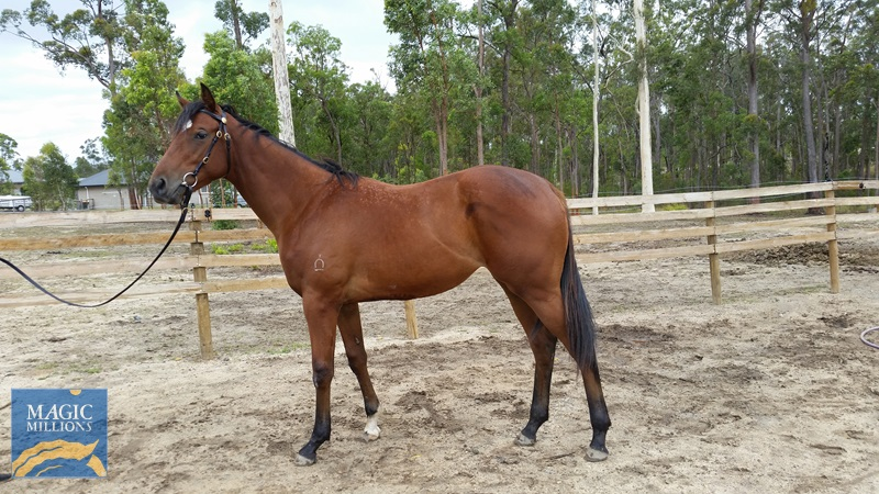 Sizzling (AUS) / Bullion Bay (AUS) - photo 1