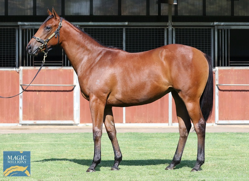 All Too Hard (AUS) / Bollinger Rose (AUS) - photo 1