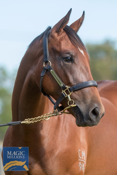 American Pharoah (USA) / Blissful (AUS) - photo 3