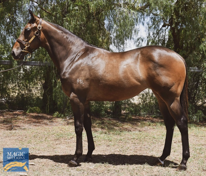 Hinchinbrook (AUS) / Moroccan Rose (AUS) - photo 1