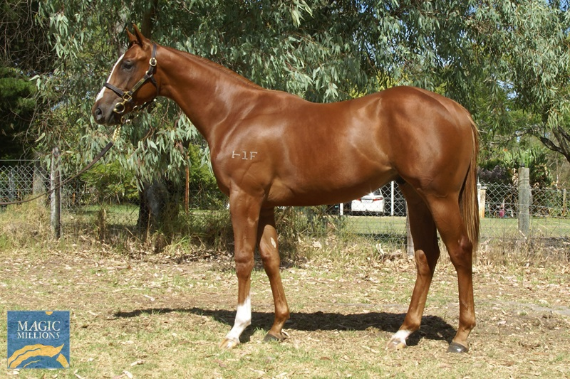 Exceed and Excel (AUS) / Moccasin Bend (AUS) - photo 1