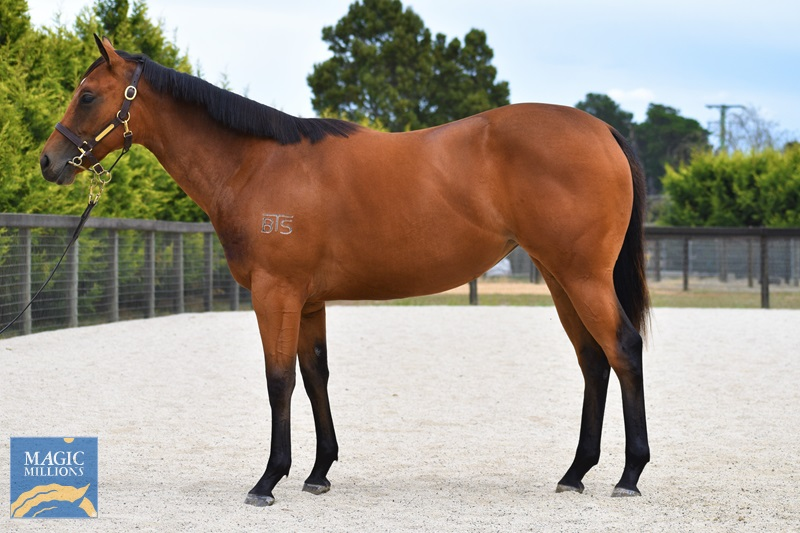 Myboycharlie (IRE) / Love Buggy (AUS) - photo 1