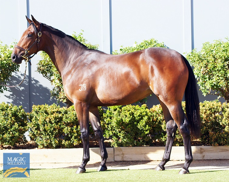 Myboycharlie (IRE) / Red Fever (AUS) - photo 1