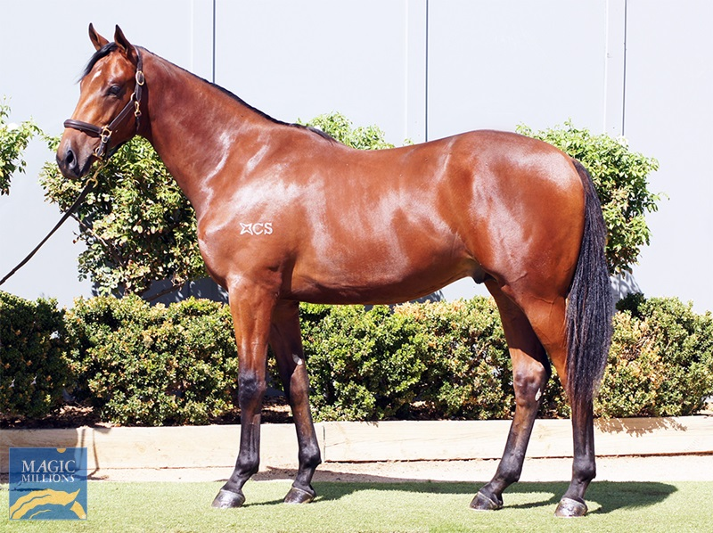 Sir Prancealot (IRE) / Rosebrook (AUS) - photo 1