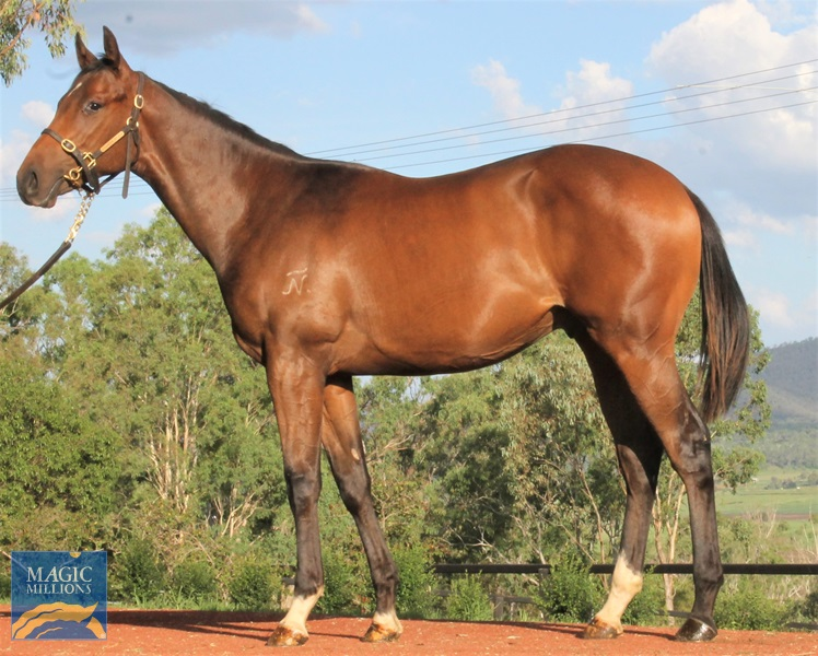 Spirit of Boom (AUS) / Countess Dehere (AUS) - photo 1