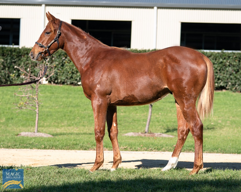 Deep Field (AUS) / Just as Cosmic (AUS) 2019 Colt - photo 1