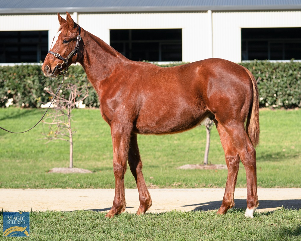 Capitalist (AUS) / Limealicious (AUS) 2019 Colt - photo 1