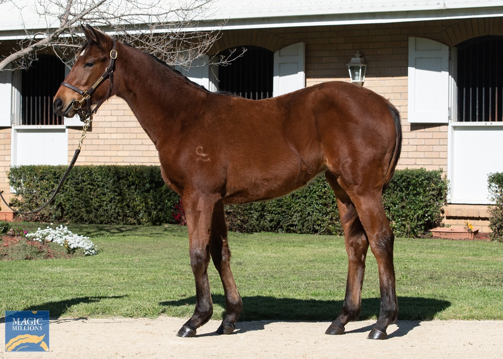 Savabeel (AUS) / Bella Gioia (NZ) 2019 Filly - photo 1