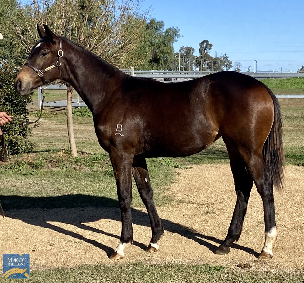 Sooboog (AUS) / Famous Lilly (USA) 2019 Filly - photo 1