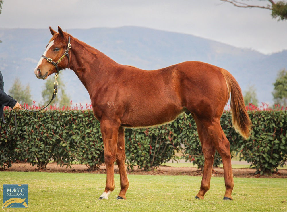 Capitalist (AUS) / Killer Queen (AUS) 2019 Colt - photo 1