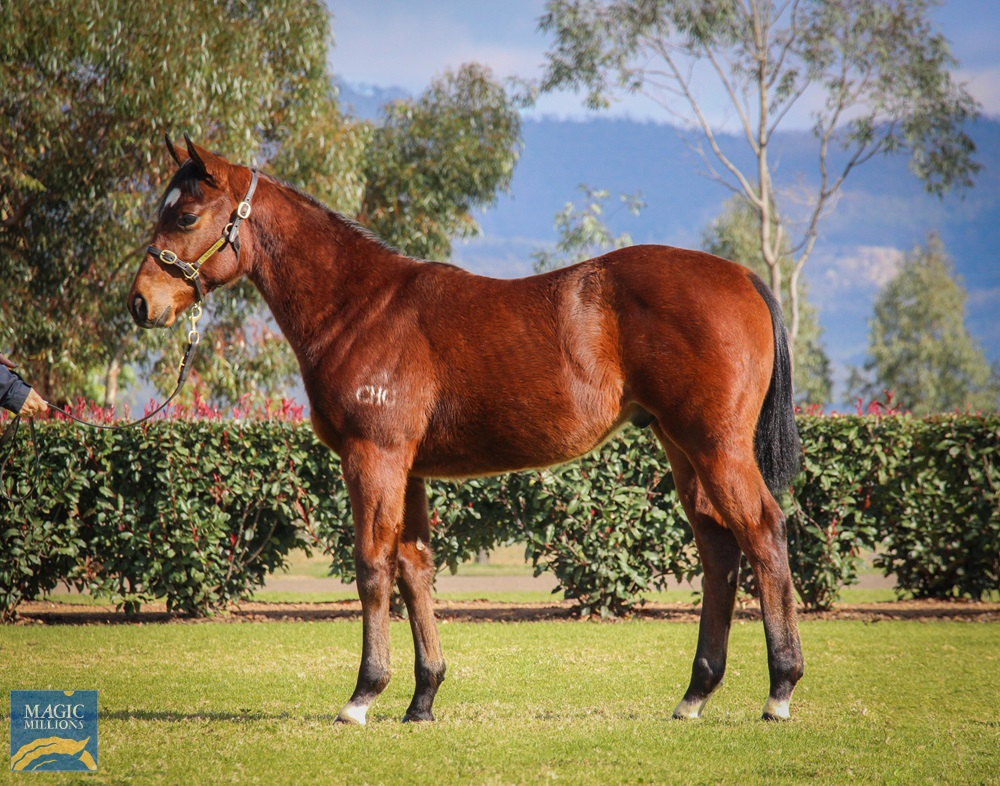 Russian Revolution (AUS) / Dancingfordiamonds (AUS) 2019 Colt - photo 1