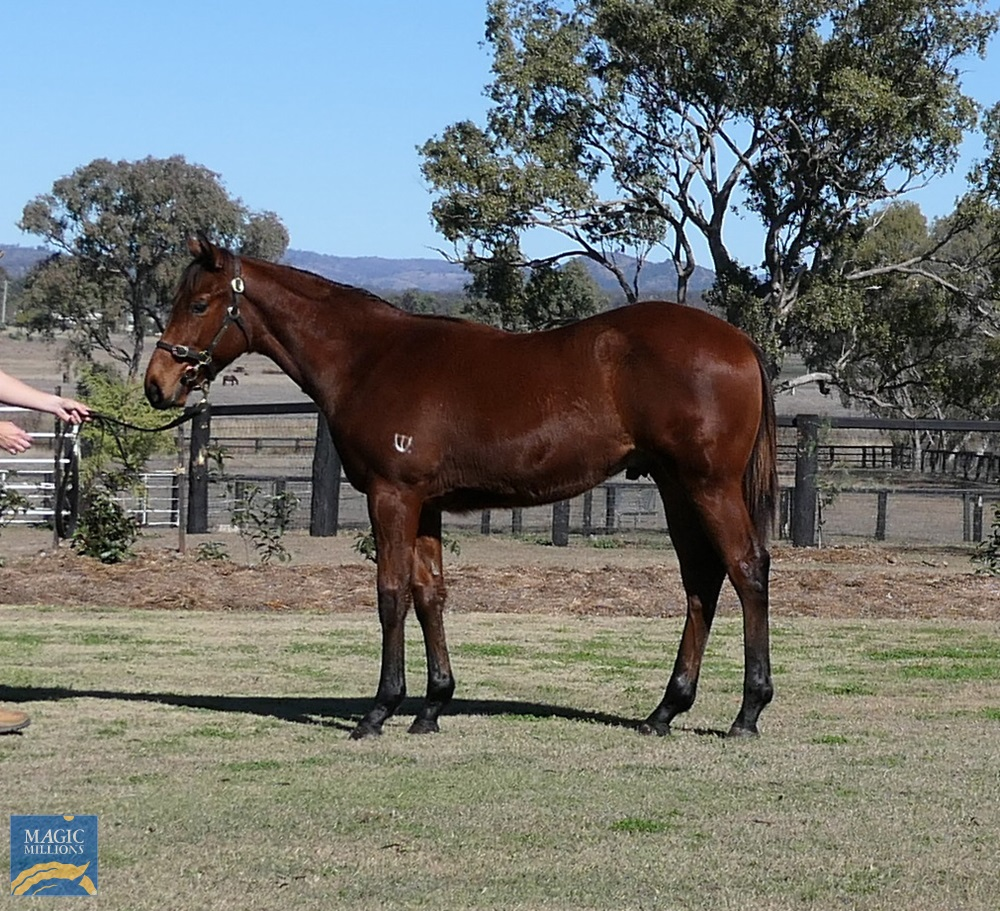 All Too Hard (AUS) / Tutu (AUS) 2019 Colt - photo 1