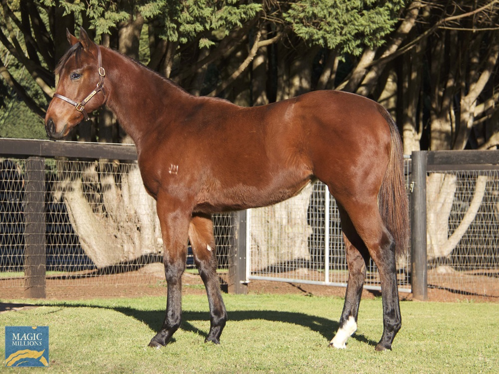 No Nay Never (USA) / Rock Candy (AUS) 2019 Filly - photo 1