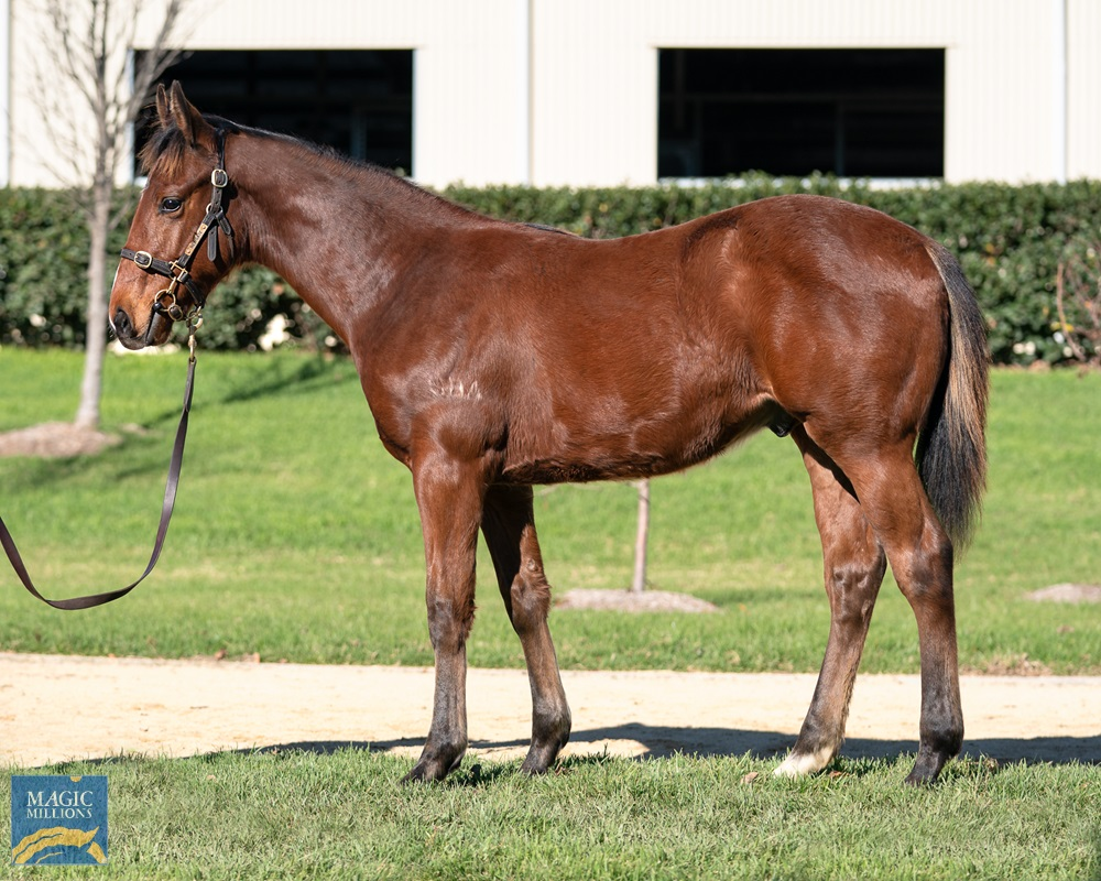 Pierro (AUS) / Brilliant Bisc (AUS) 2019 Colt - photo 1