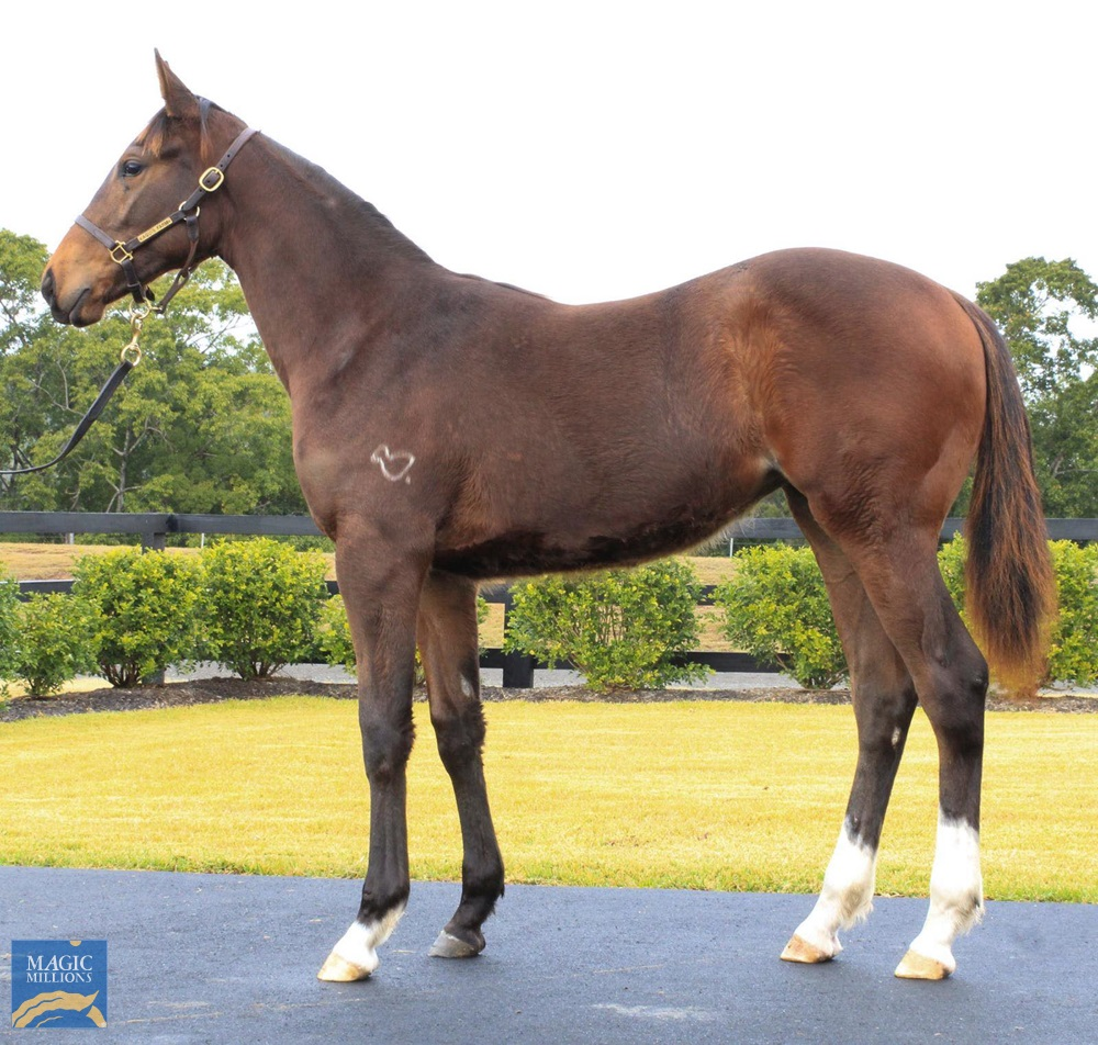 Winning Rupert (AUS) / Wicked Whispers (AUS) 2019 Filly - photo 1