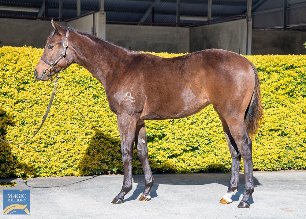 The Mission (AUS) / But Perfect (AUS) 2019 Filly - photo 1