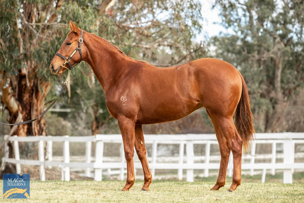 All Too Hard (AUS) / Twin Star Rocket (AUS) 2018 Filly - photo 1