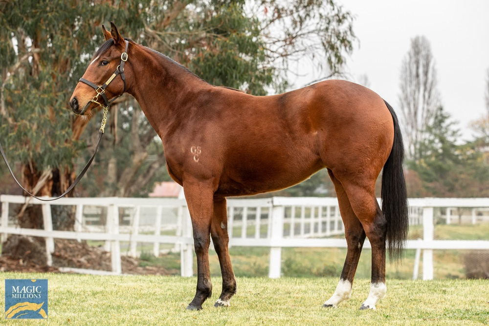 Your Song (AUS) / Breezing Home (AUS) 2018 Filly - photo 1
