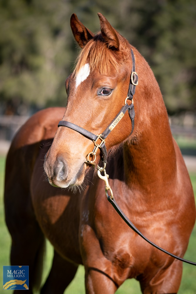 More Than Ready (USA) / Holly Zou (AUS) 2019 Colt - photo 2