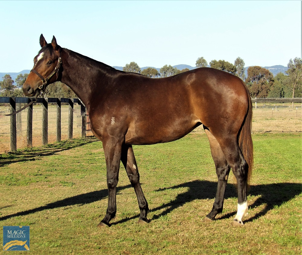 Nicconi (AUS) / Gilded Grace (AUS) 2018 Filly - photo 1