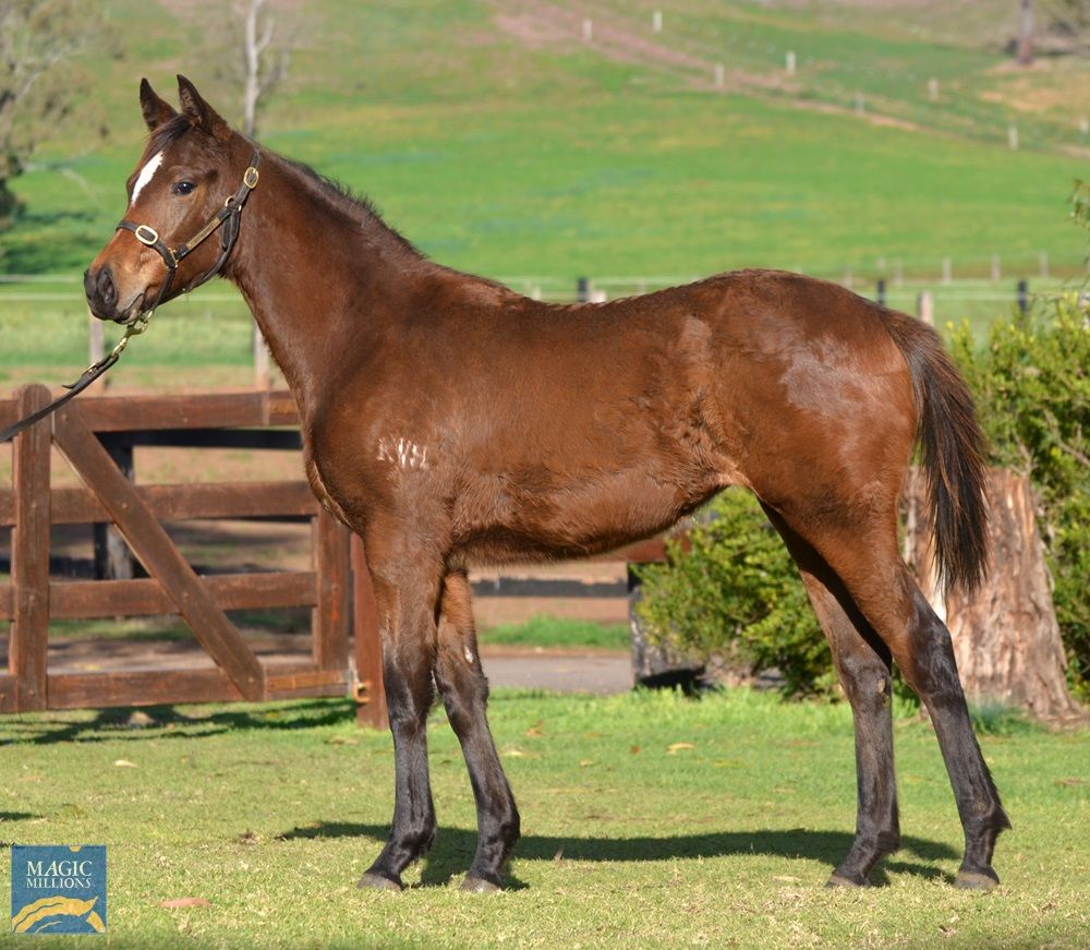 Rubick (AUS) / Holy Delusions (AUS) 2019 Filly - photo 1