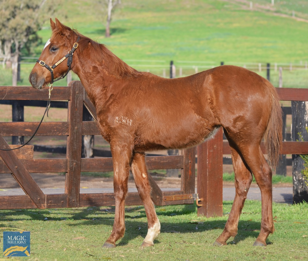 Sooboog (AUS) / Red Kitty (AUS) 2019 Filly - photo 1