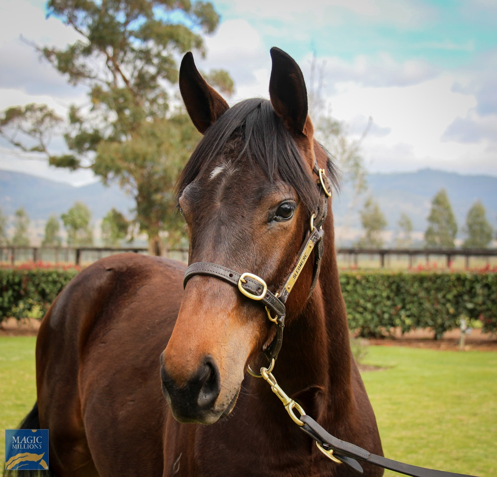 So You Think (NZ) / Placement (NZ) 2019 Colt - photo 2