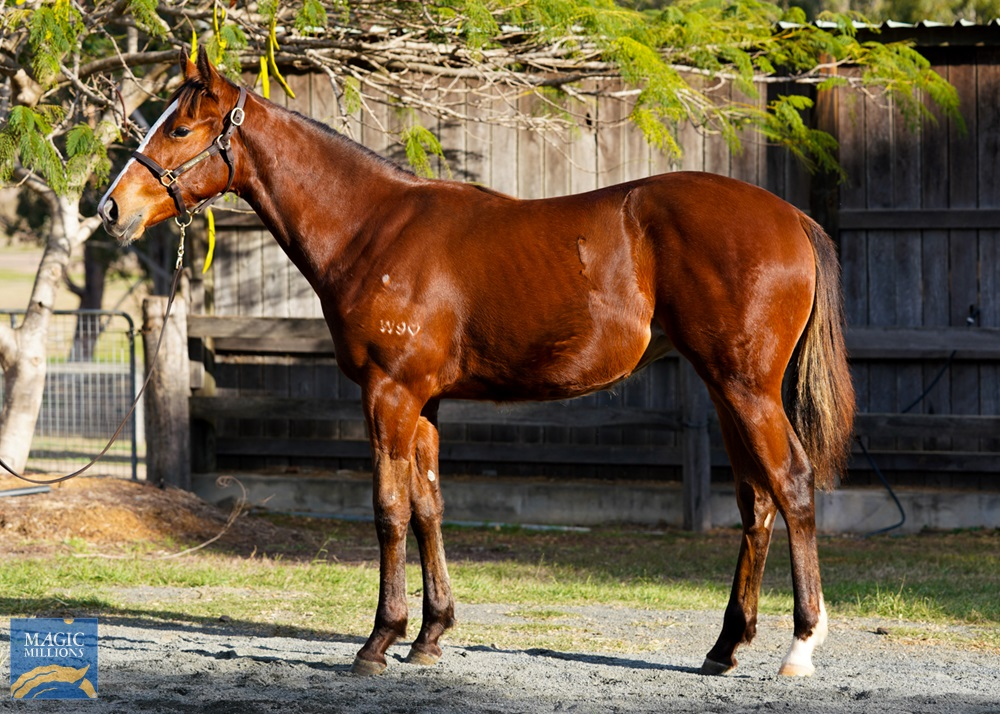 Flying Artie (AUS) / Joyfilly Ours (NZ) 2019 Filly - photo 1