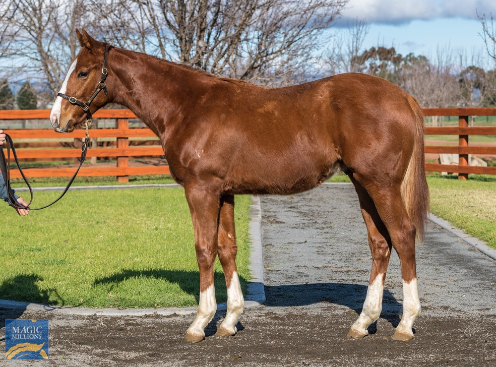 No Nay Never (USA) / Bring the Girl (AUS) 2019 Colt - photo 1