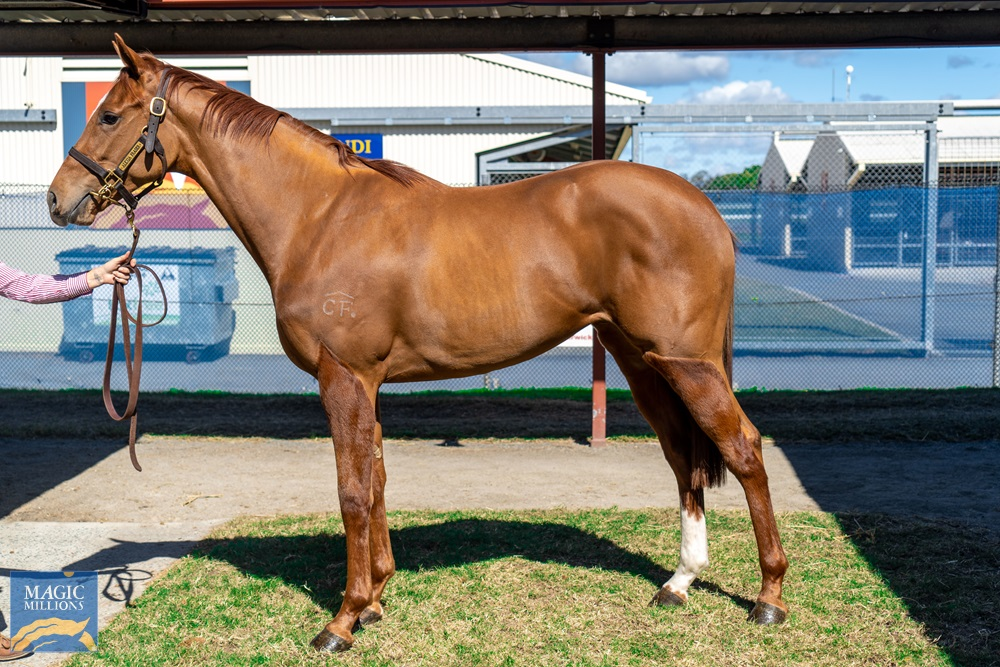 Dissident (AUS) / Cosmic Belle (AUS) 2018 Filly - photo 1