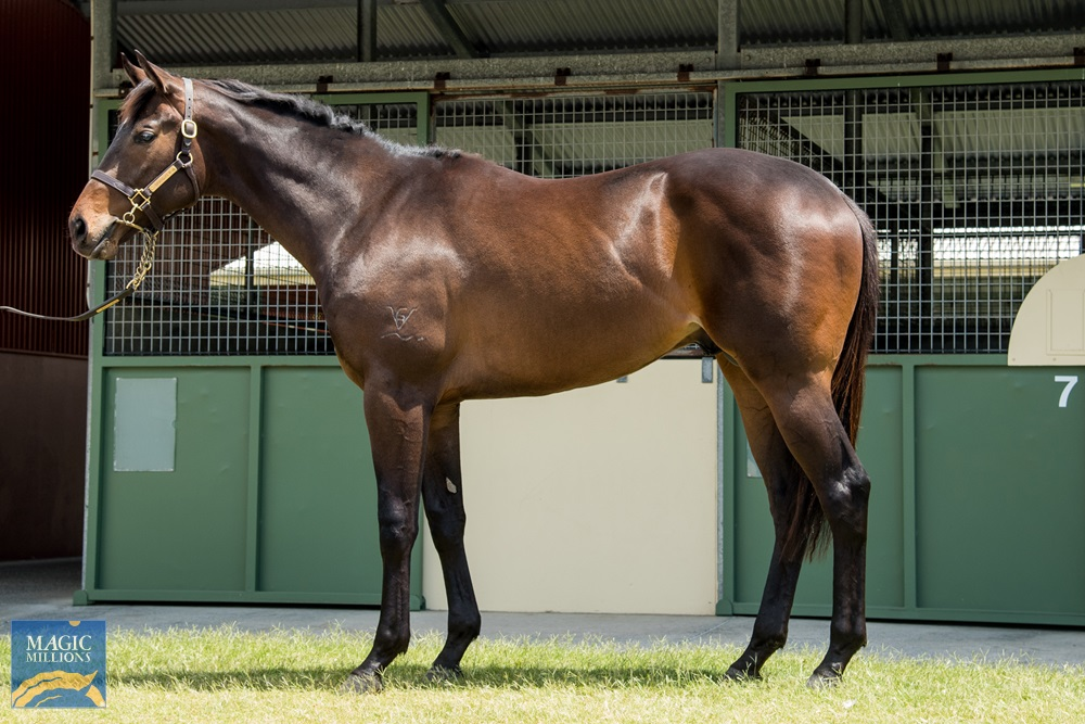 Under the Louvre (AUS) / Call Me Paris (AUS) 2018 Colt - photo 1