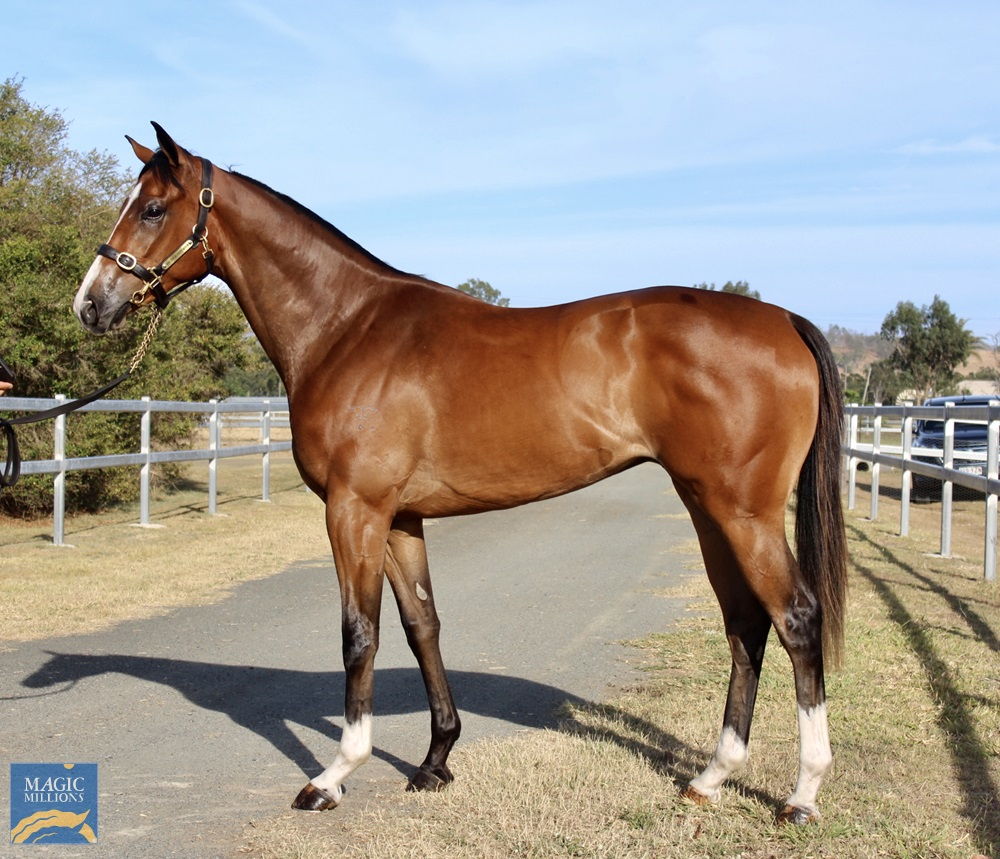 Dundeel (NZ) / Katique (AUS) 2018 Colt - photo 1