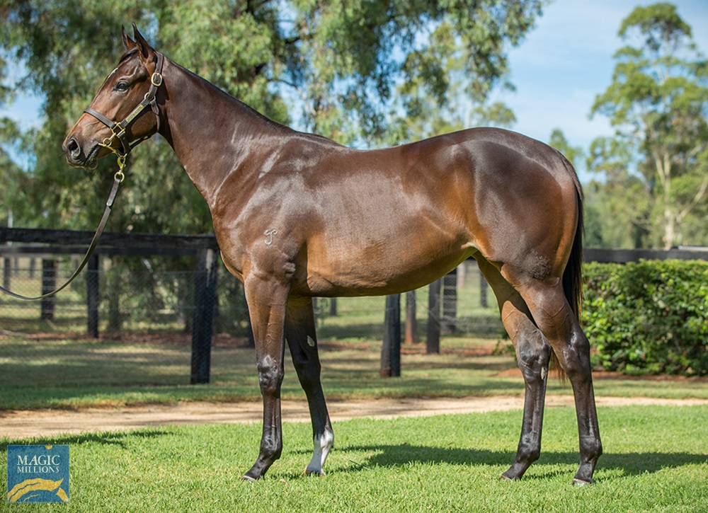 Hellbent (AUS) / Diamond Cove (AUS) 2019 Filly - Image 1