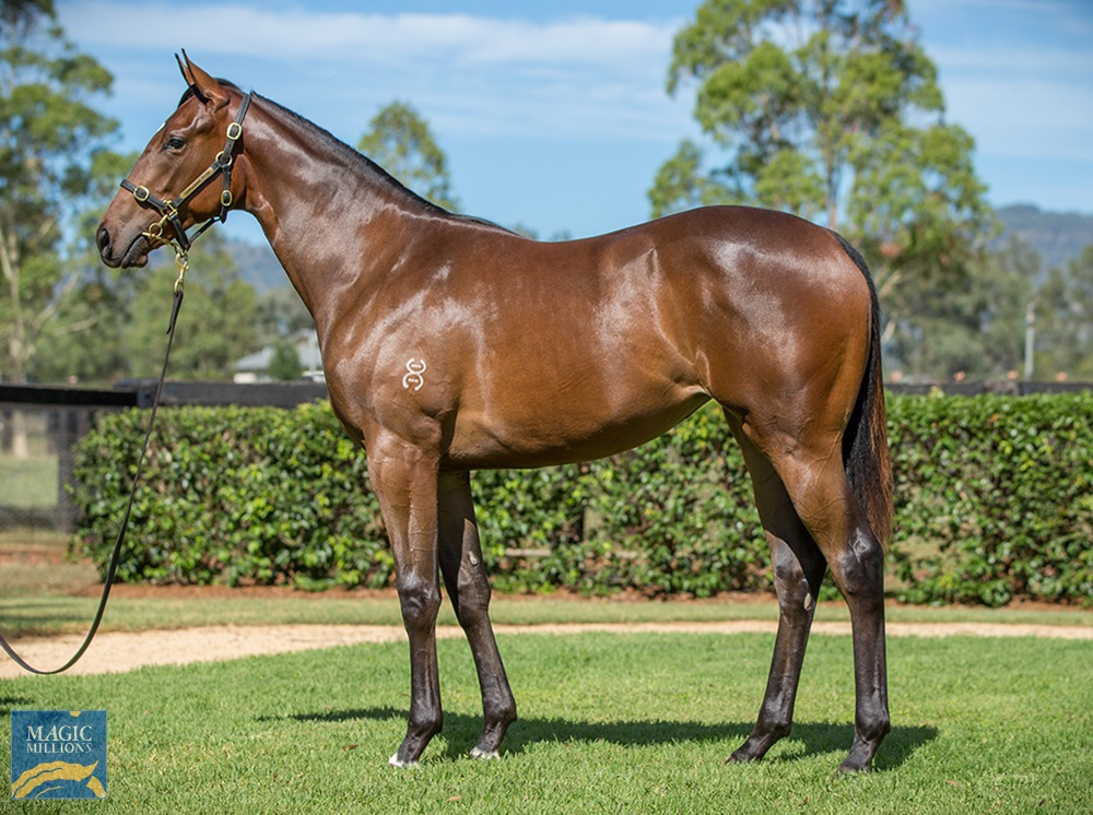 Exceed and Excel (AUS) / Status Quo (AUS) 2019 Filly - Image 1