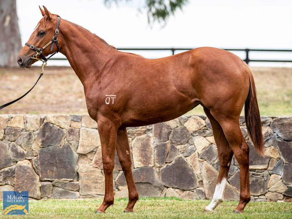 Pariah (AUS) / My Obsession (AUS) 2019 Filly - Image 1