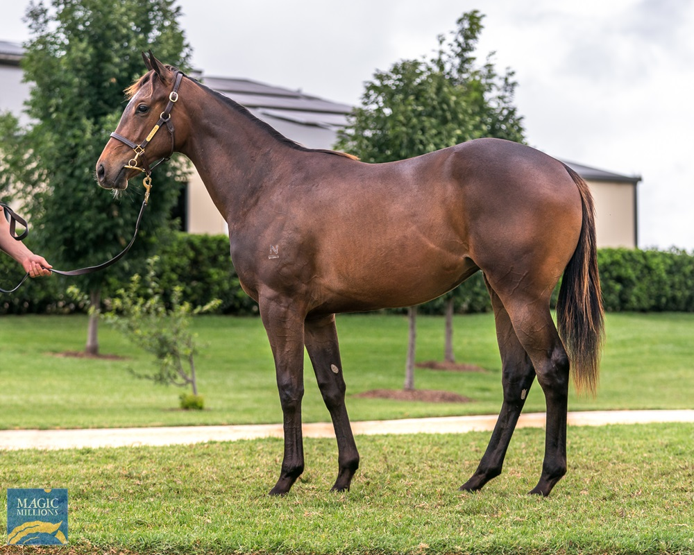 Lonhro (AUS) / Song Street (IRE) 2019 Filly - Image 1