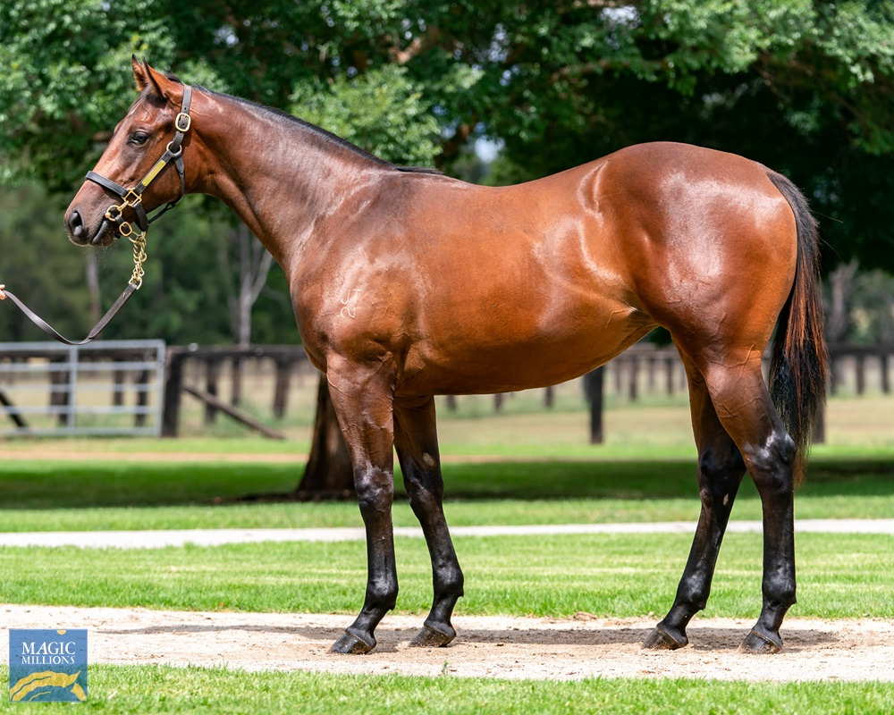 Nicconi (AUS) / Leap Lively (AUS) 2019 Filly - Image 1