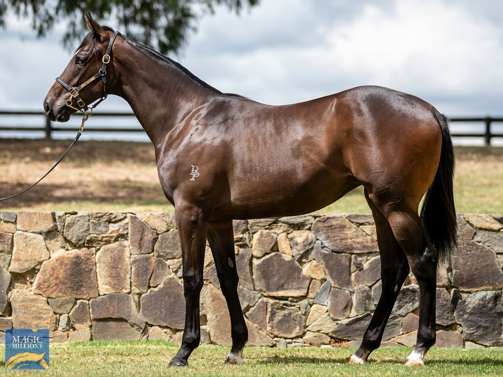 Smart Missile (AUS) / Northern Cath (AUS) 2019 Filly - Image 1