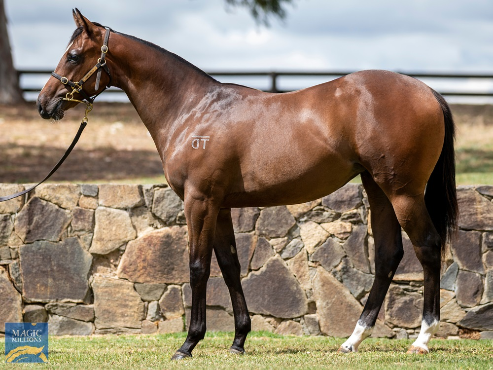 Smart Missile (AUS) / Invited (AUS) 2019 Filly - Image 1