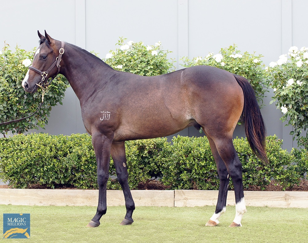 Smart Missile (AUS) / Soiree Girl (AUS) 2019 Colt - Image 1